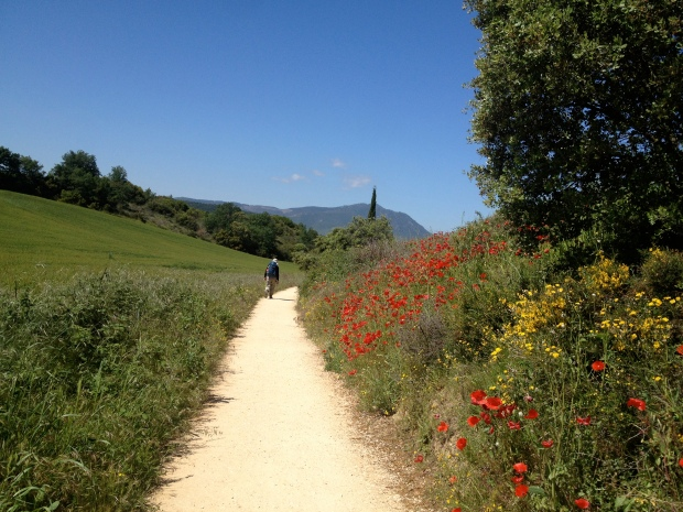 Blue sky and poppies