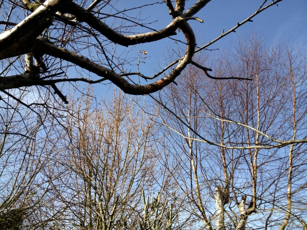 Blue sky, bare March branches